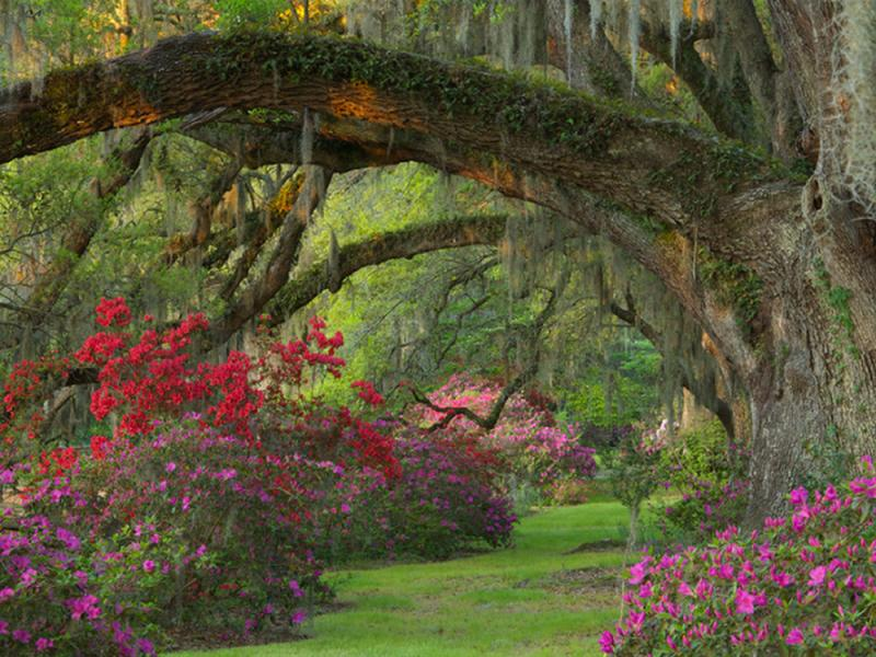 Plantations And Gardens In Charleston Sc