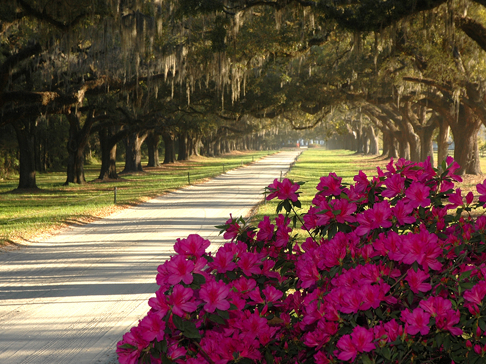 Boone Hall Plantation | Charleston.com